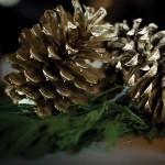 golden-pinecones_300sq-4web